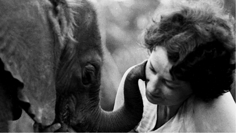 CNN meets the people keeping  'Mama Elephant's' dream alive