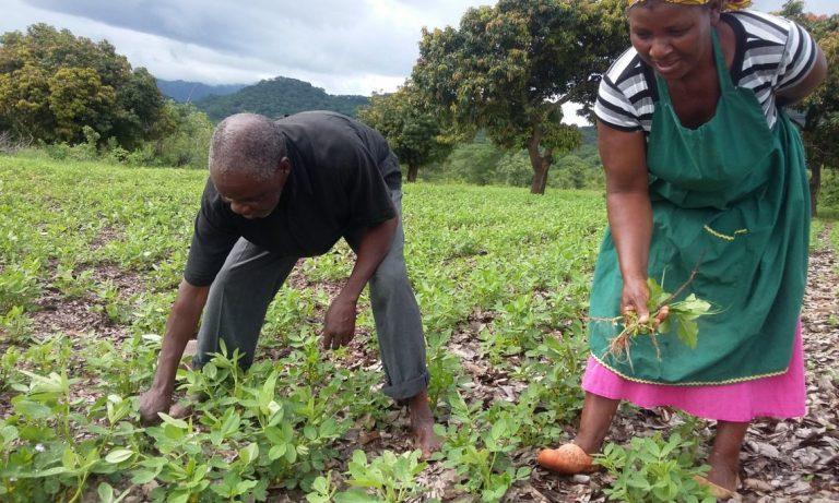 USAID Launches Farmer-to-Farmer Program in Zimbabwe
