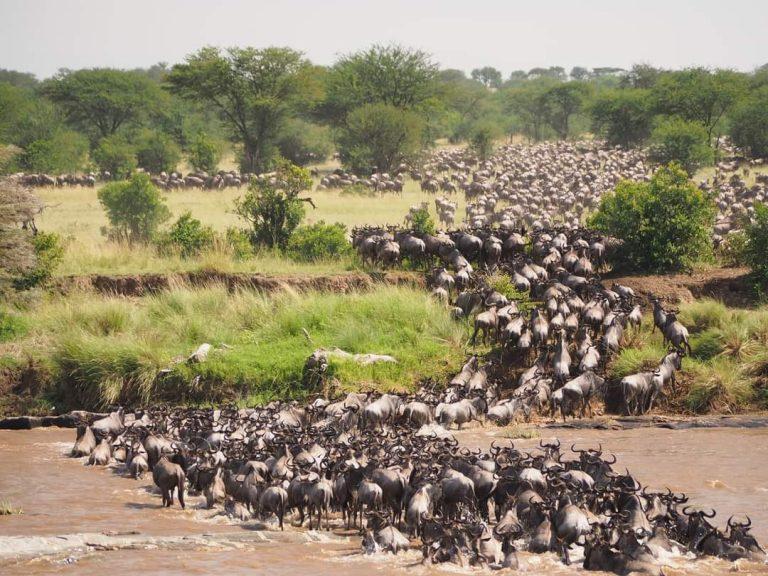 Sarova Experience: It is Migration Season in Kenya