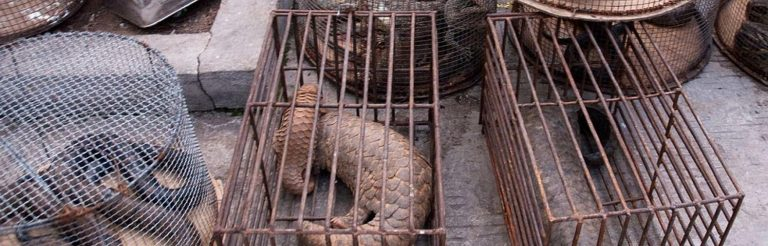 World Animal Protection  calls for an End to wildlife trade